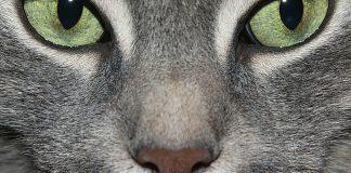 Magie art - Appelons un chat un chat par TRANTOR